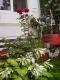 Apartment Casa Gabriela | accommodation Otopeni