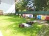 Pension Dapa   accommodation Predeal