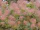 Padurea Ciornohal - botosani
