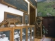 Muzeul de Paleontologie-Stratigrafie al Universitatii Babes Bolyai - cluj-napoca