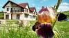 Pension Potocina - accommodation Piatra Neamt