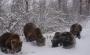 Libearty - Rezervatia de ursi de la Zarnesti - zarnesti